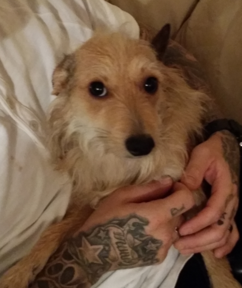 Trying To Find A Lost Female Terrier Mix Dog Her Name Is