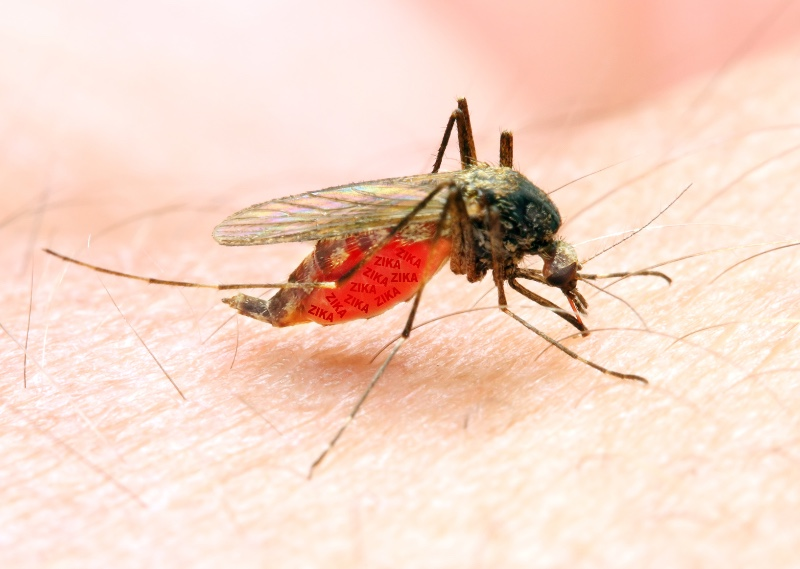 1st WNV Case Reported In Montgomery County